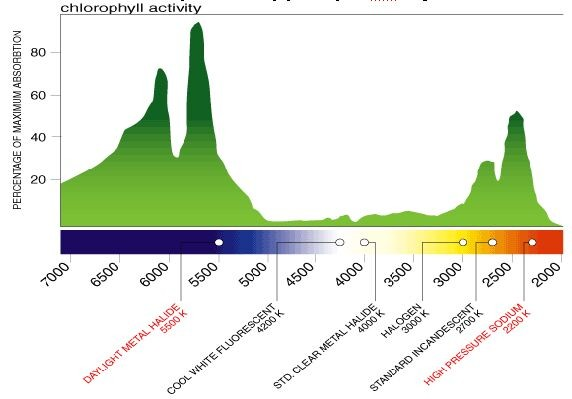ChlorophyllSpectrum3.jpg