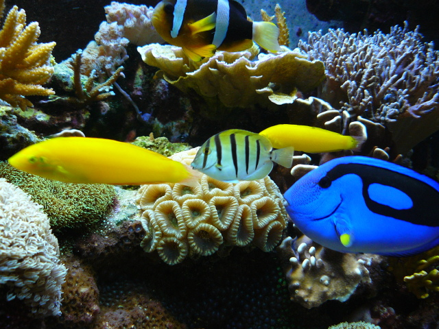 Mega powerful nitrate and phosphate remover diy page for Beginner saltwater fish